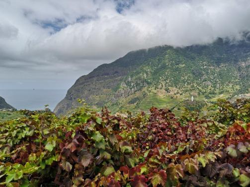 Aussicht Sao Vicente - Capelinha N. S. Fátima